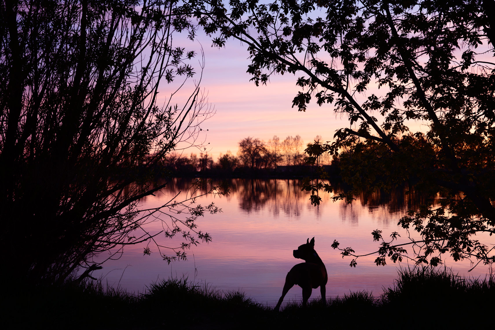 dog silhouette photograph on a lake in Boulder, Colorado.  CO Dog Photographer