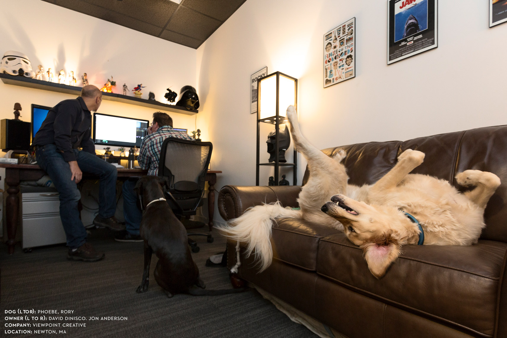 Dogs at work: Rory and Pheobe hanging out at Viewpoint Creative