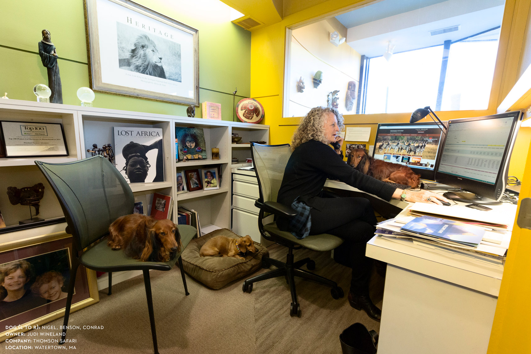 Dogs at work: Judi Wineland surrounded by her dogs at Thomson Safari