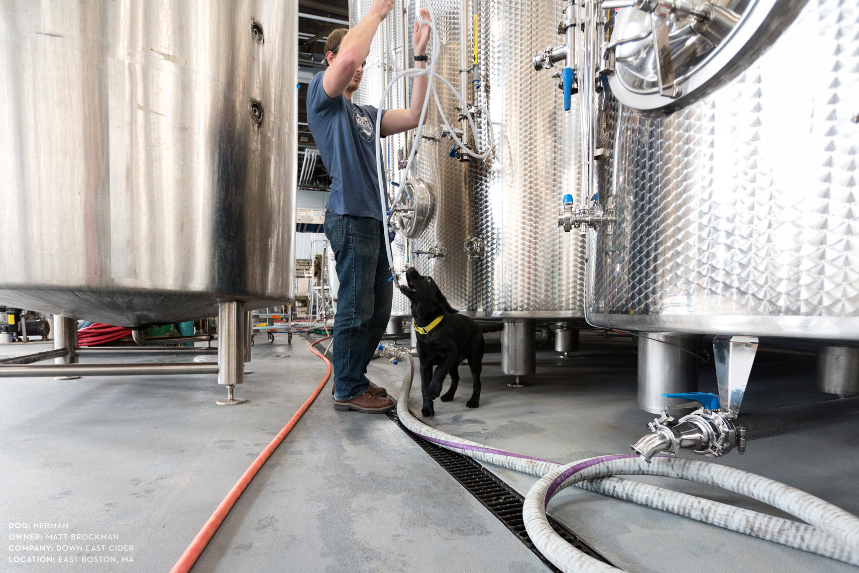 Dogs at work: Herman helping Matt out at Down East Cider