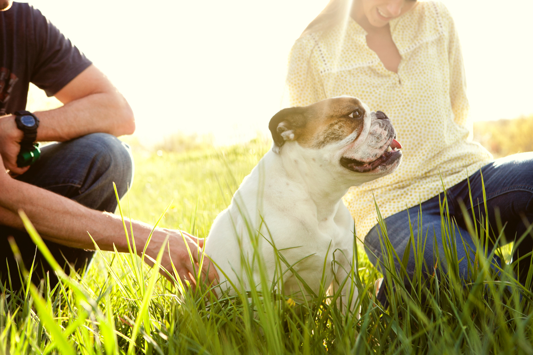 A family in a field with their bulldog