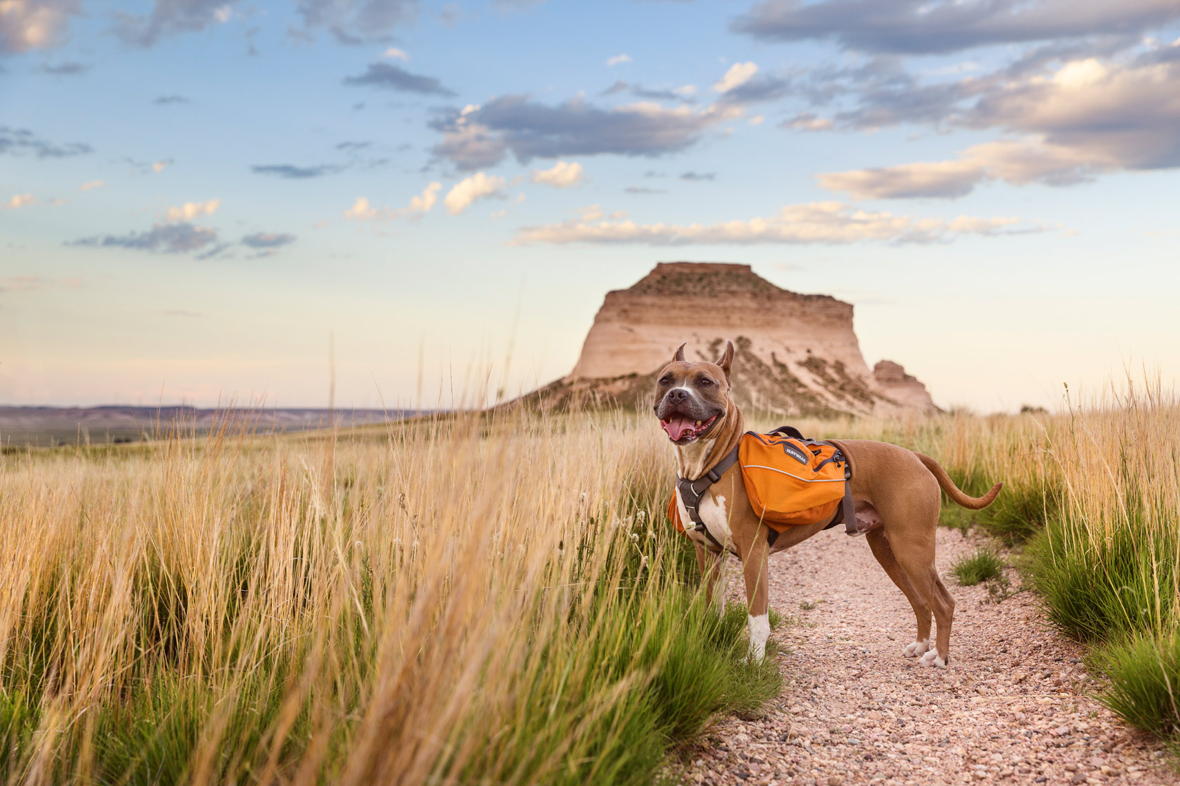 Dog in Pawnee Grasslands, Colorado