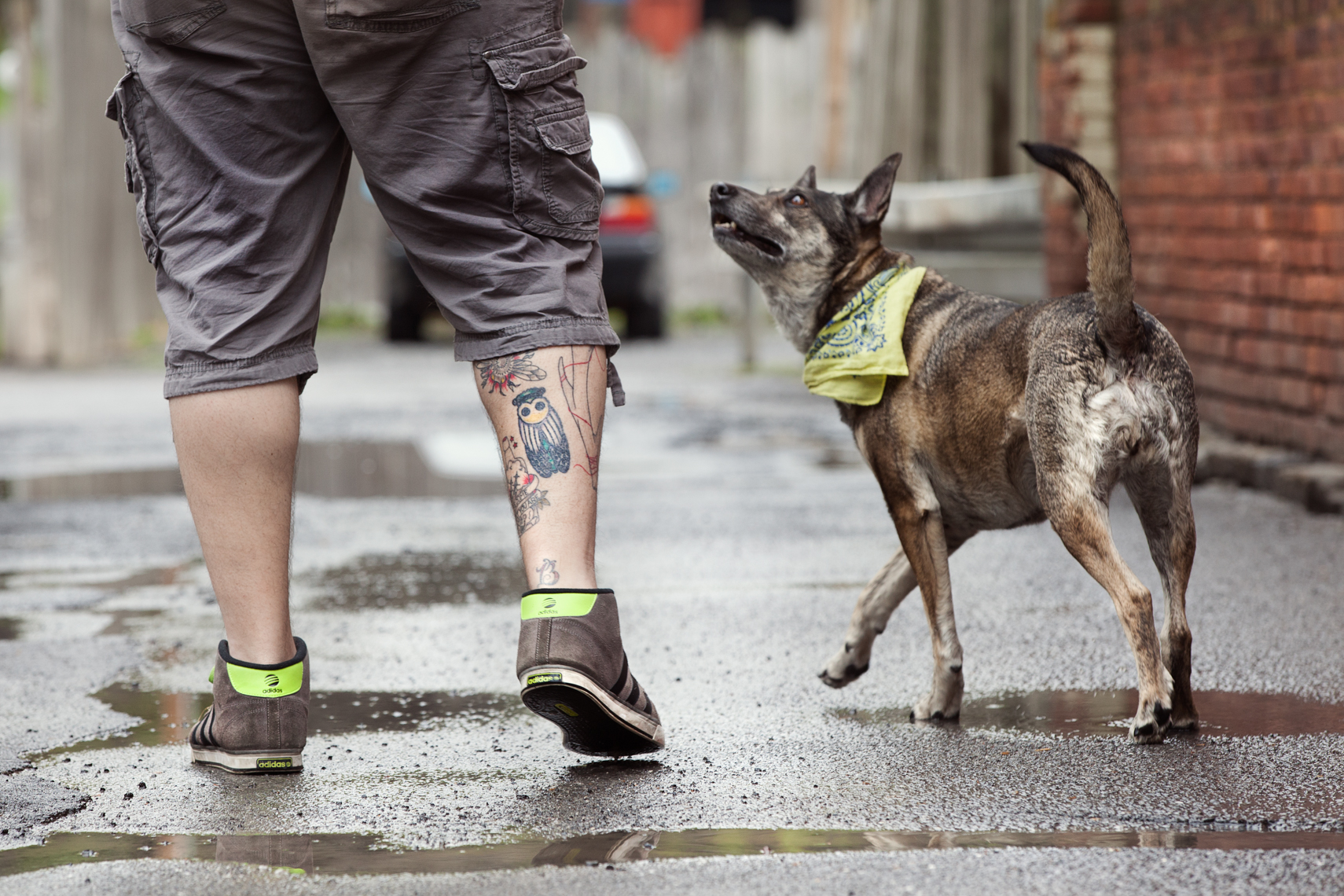Dogs_with_tattooed_owners_19