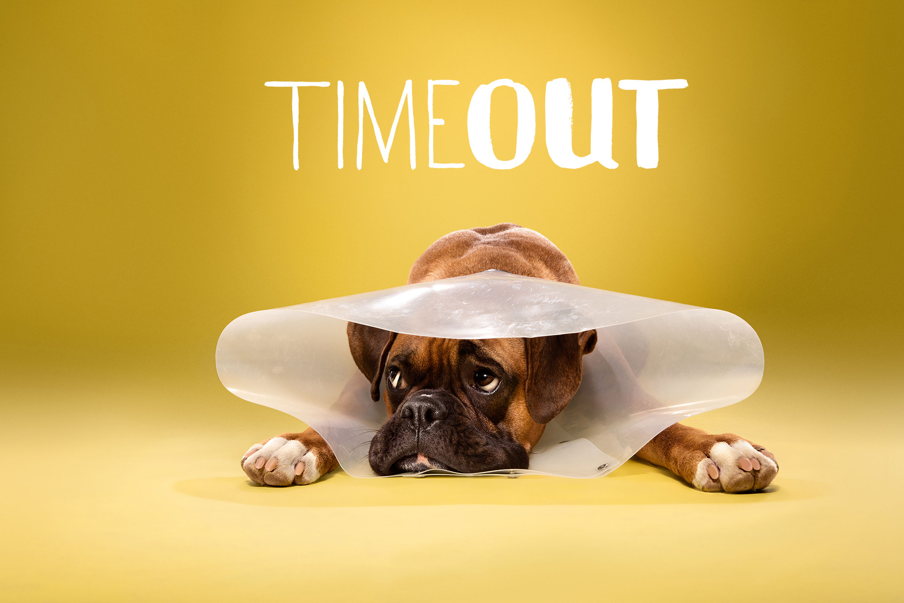 TIMEOUT_cone_of_shame_dog_portraits_01