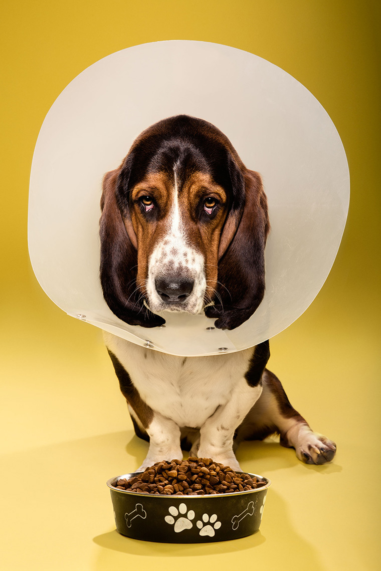 TIMEOUT_cone_of_shame_dog_portraits_03