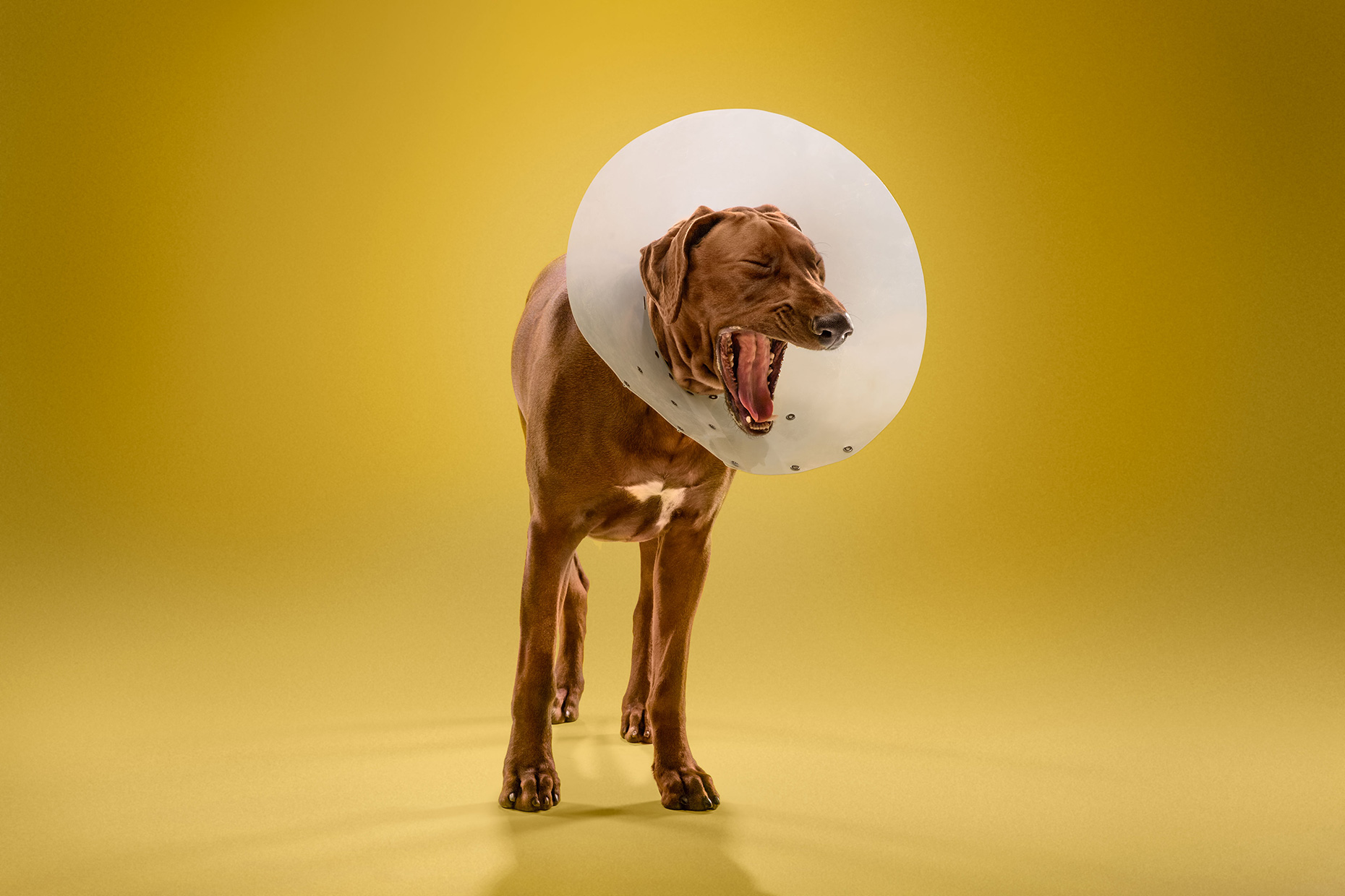 TIMEOUT_cone_of_shame_dog_portraits_06
