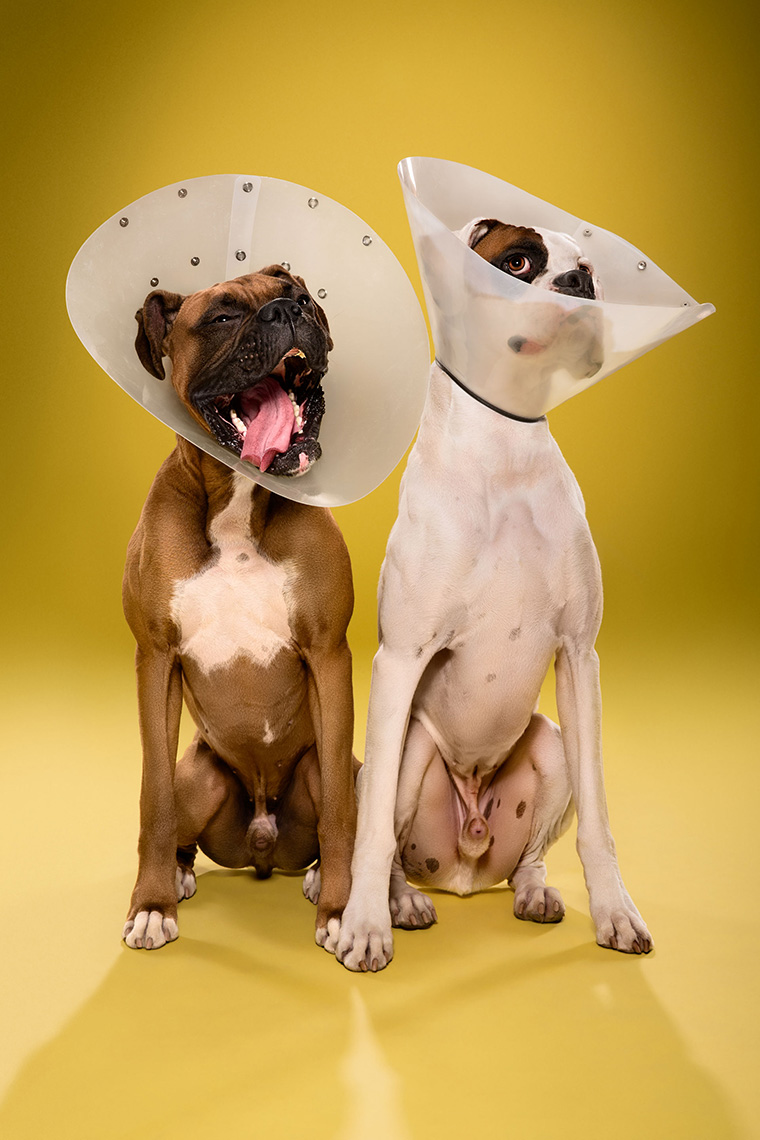 TIMEOUT_cone_of_shame_dog_portraits_09