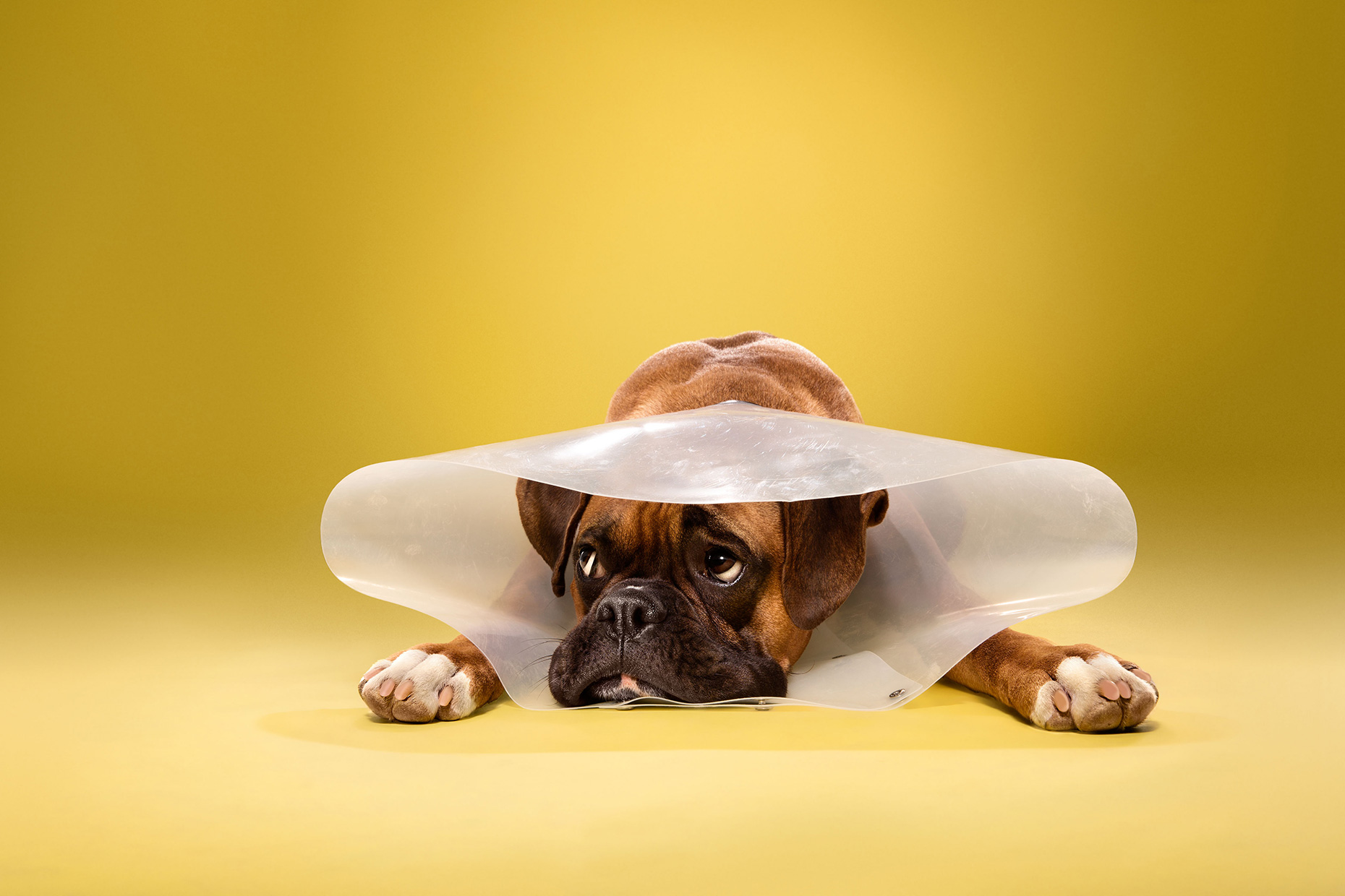 TIMEOUT_cone_of_shame_dog_portraits_10