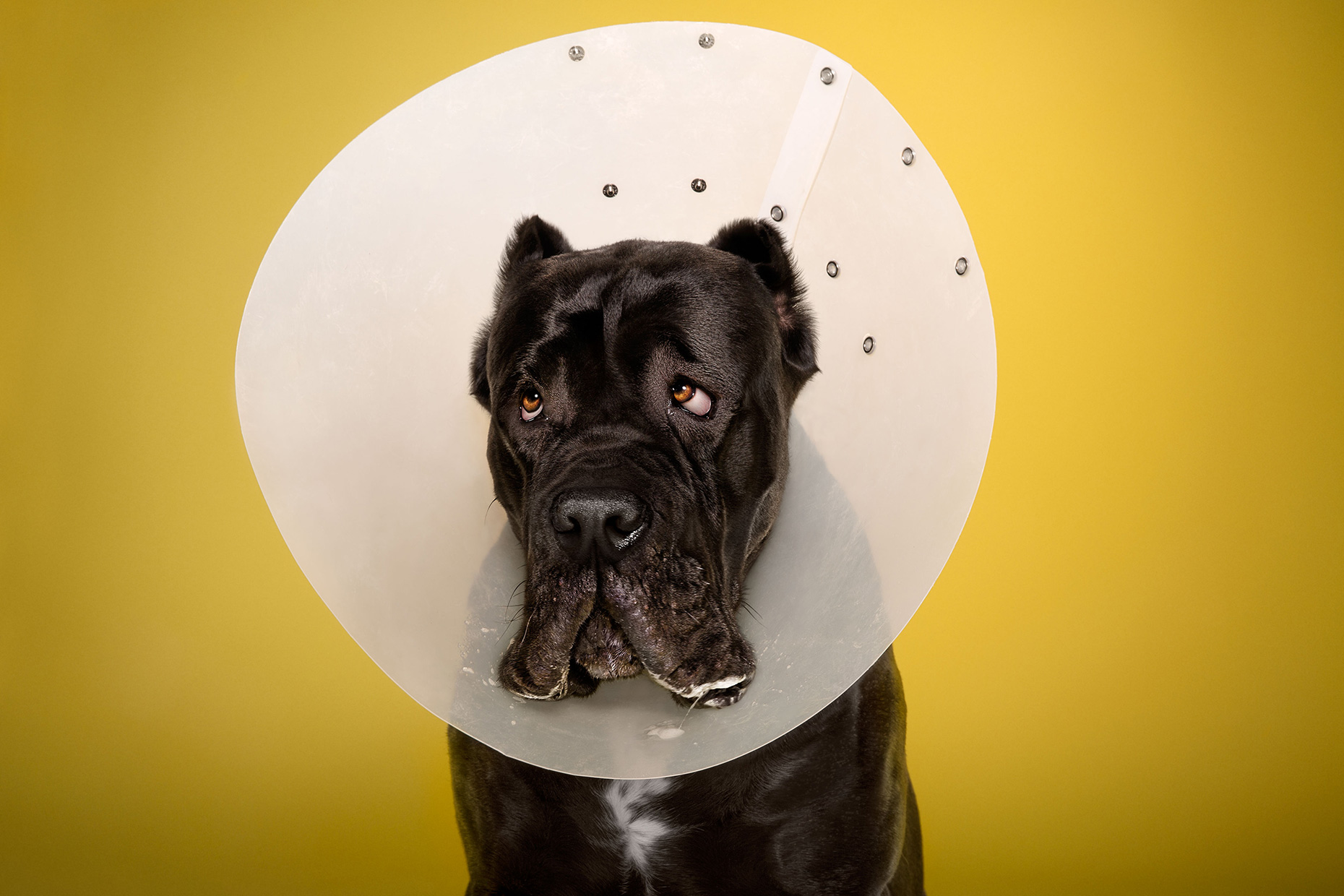 TIMEOUT_cone_of_shame_dog_portraits_12