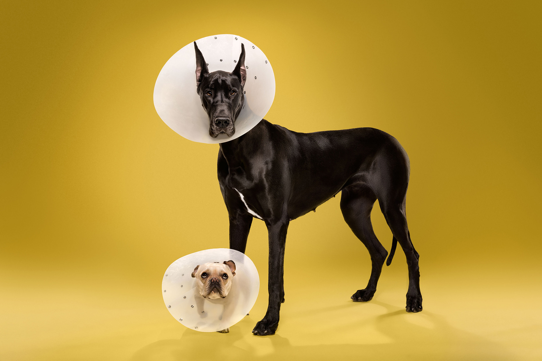TIMEOUT_cone_of_shame_dog_portraits_15