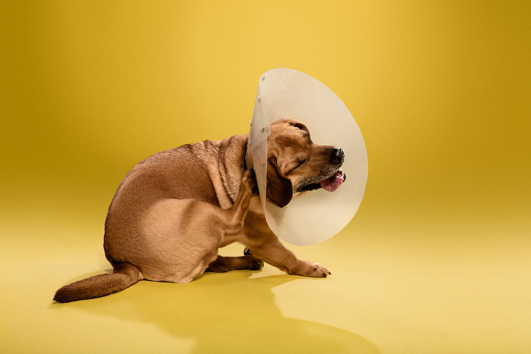 TIMEOUT_cone_of_shame_dog_portraits_16