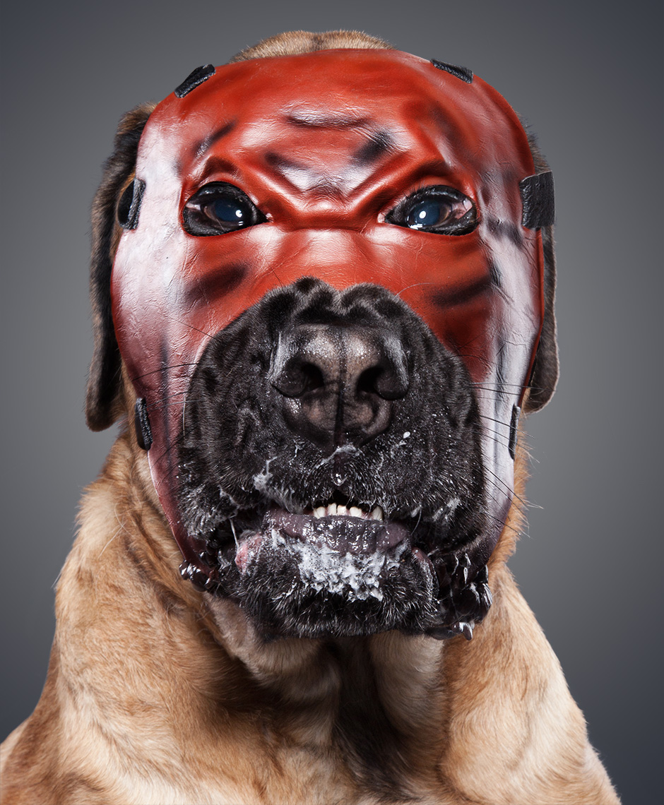 Mastiff as Kane