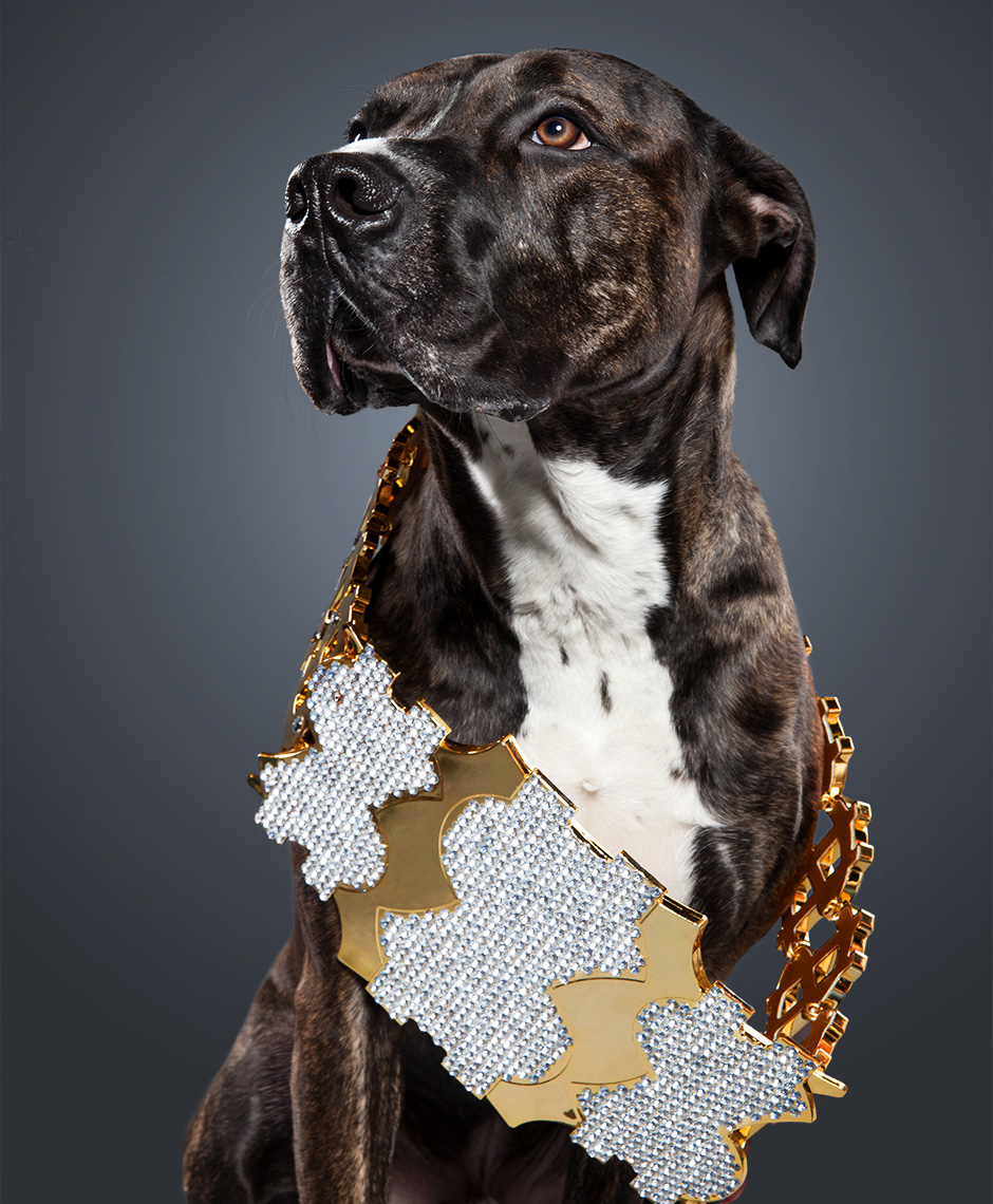 Pit Mix as Million Dollar Man