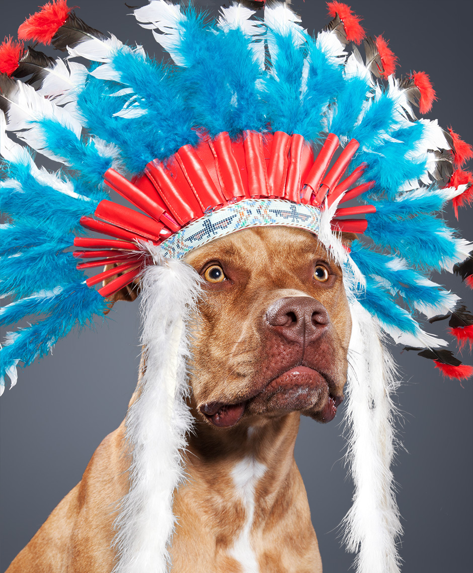 Pit bull as Chief Jay Strongbow