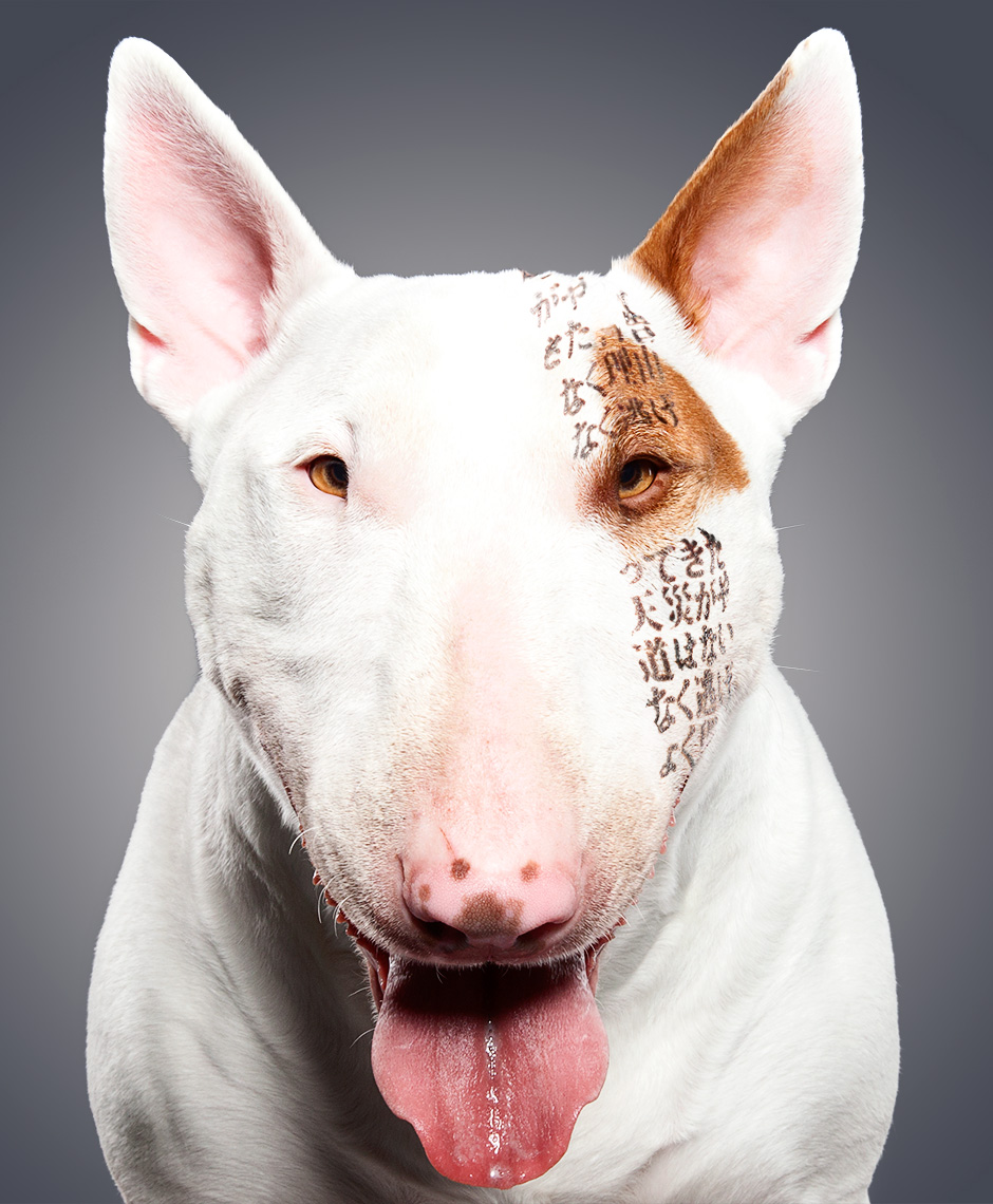 Bull Terrier as Tensai
