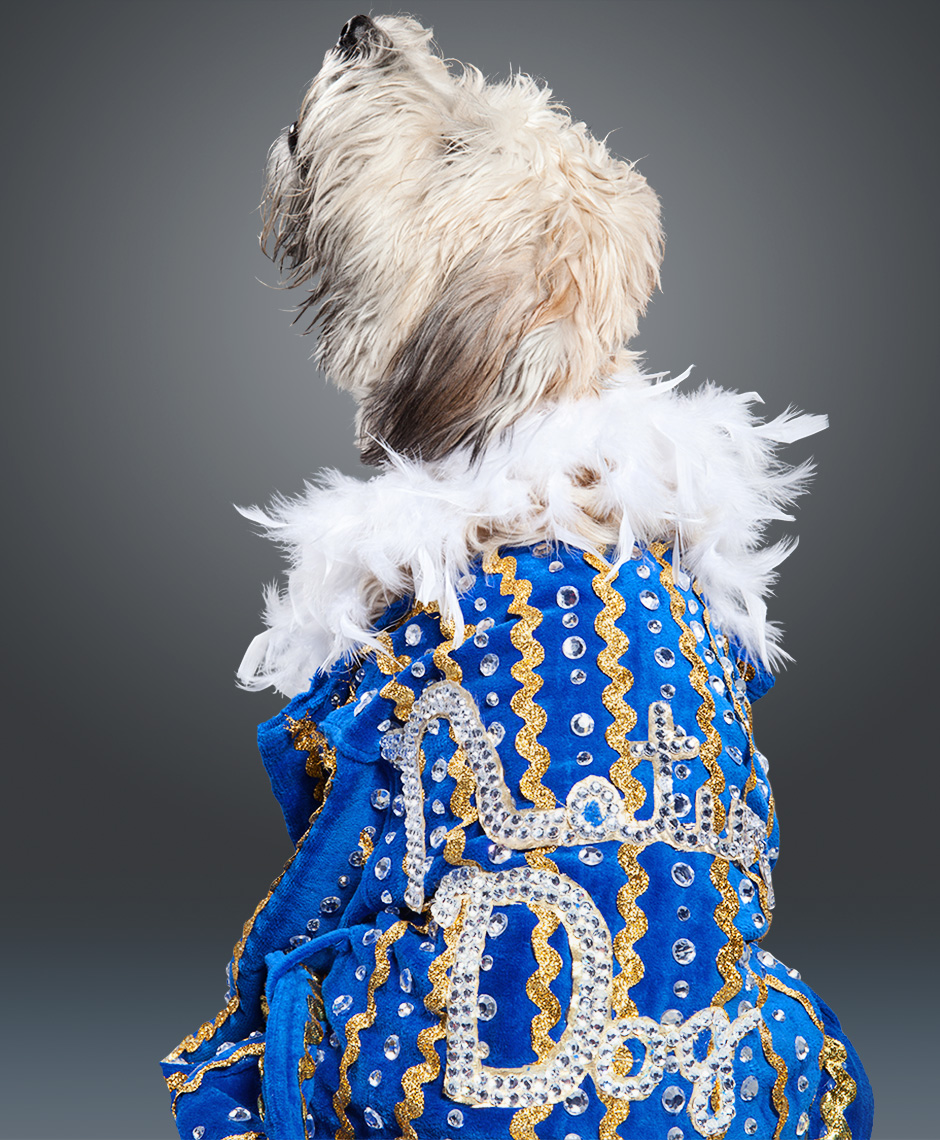 Softcoated Wheaton Terrier as Rick Flair